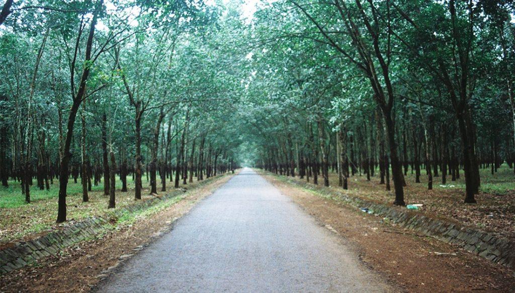 """Gia Lai: Những con đường """"đẹp lãng mạn"""" xuyên rừng cao su"""