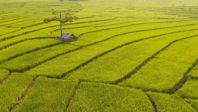 Read more about the article Gia Lai: Ruộng bậc thang Chư Sê 'đẹp ngất ngây' nhìn từ trên cao